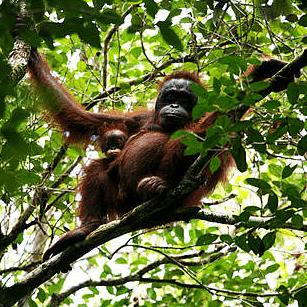 Borneo 2019 - Judith Simmonds