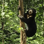 Outlook Expedition.Borneo - Sascha Stevenson