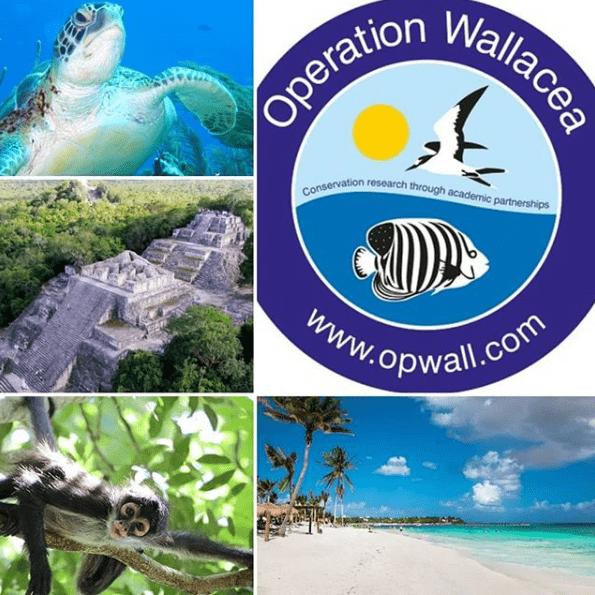 Operation Wallacea Mexico 2021 - Laura Harvey