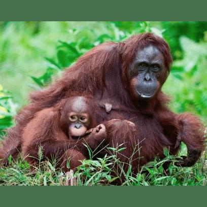 Malaysia and Borneo 2022 - Cydney Felix
