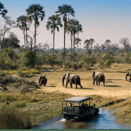 Botswana 2020 - Phiippa Lawler