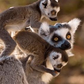 World Challenge Madagascar 2019 - Chris Bird