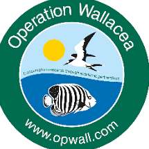 Operation Wallacea Mexico 2018 - Fiona Elezi