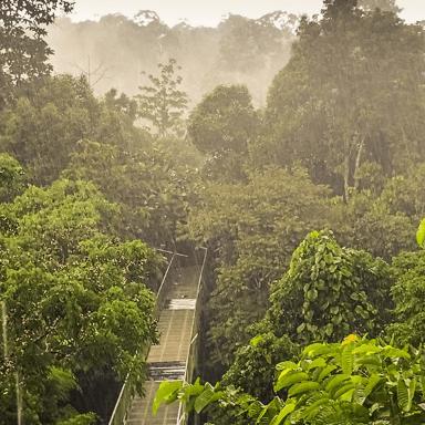 Borneo 2020 - Megan Pitman