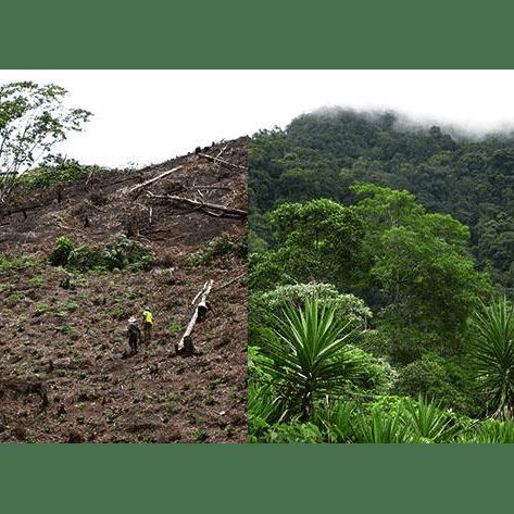 Operation Wallacea 2018 Honduras - Josephine Macdonald
