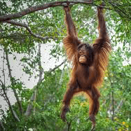 Borneo 2018 - Tegan Williams