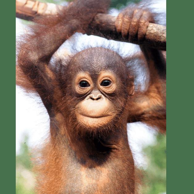 Sumatra 2021 - Sophie Hansard