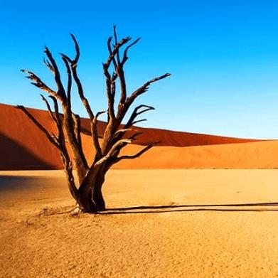 World Challenge Namibia 2020 - Matthew Smith