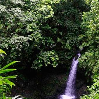 Operation Wallacea Dominica 2019 - Ellen Hamilton