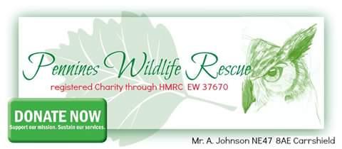 Pennines Wildlife Rescue