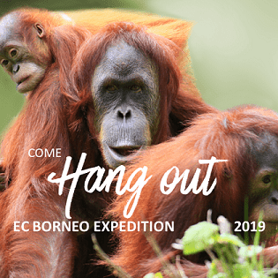 World Challenge Borneo 2019 - Sophie Jacques