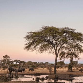 World Challenge Botswana 2020 - Adam Anderson