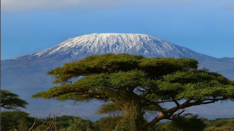 Meningitis Research Foundation Kilimanjaro 2021 - Wiktoria Fudala