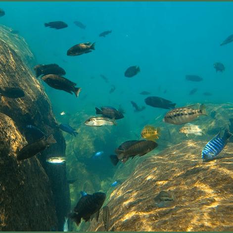 Lake Malawi research - Claudia Acerini