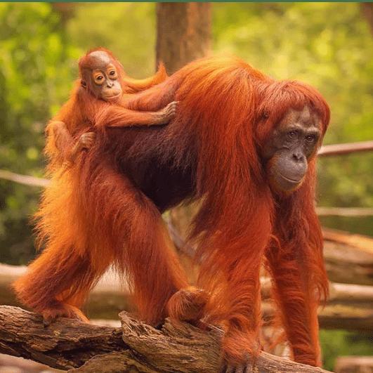 Borneo 2021 - Tom Howe