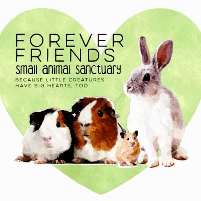 Forever Friends Small Animal Rescue