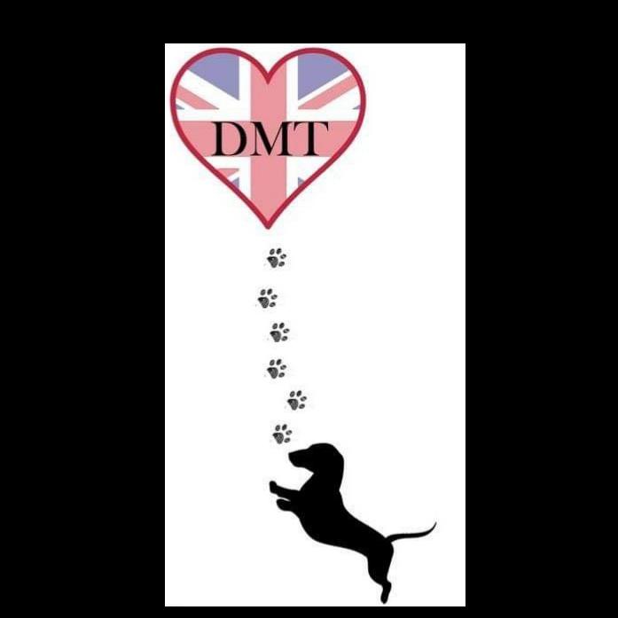 DMT DSG