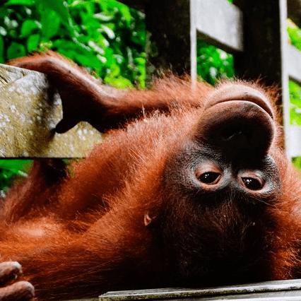 World Challenge Borneo 2021 - Thomas Brown