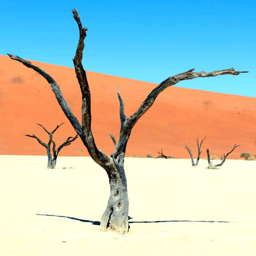 World Challenge Namibia 2020 - George Cook