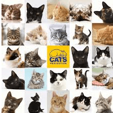 Cats Protection - Halifax & Huddersfield