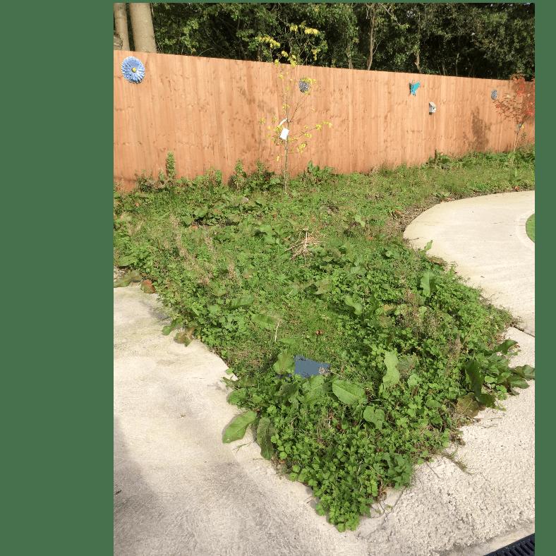 Trewarren Garden Project