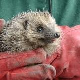 Preston Hedgehog Rescue