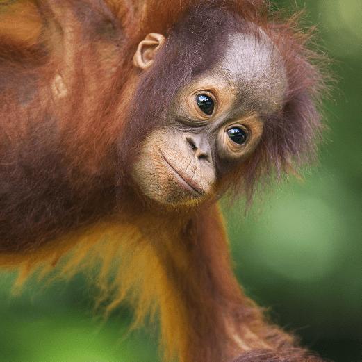 True Adventure Borneo 2021 Katherine Edwards