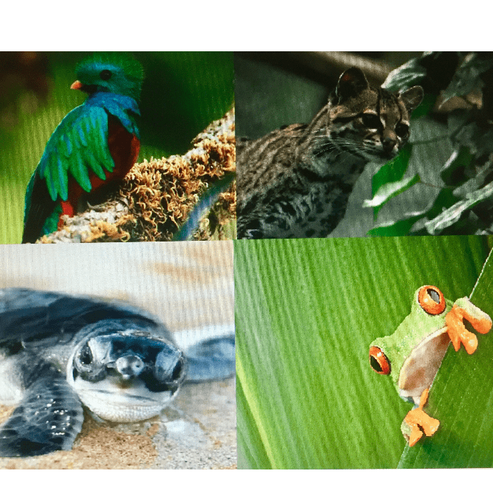 Camps International Costa Rica 2019 - Anya Blanshard