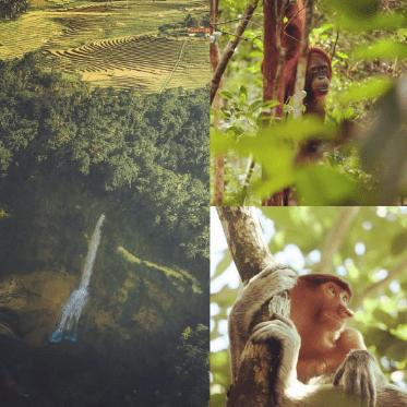 Borneo 2020 - Jessie Morris