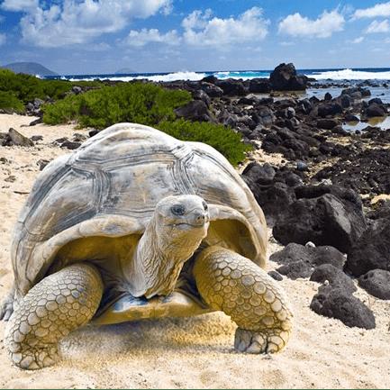 Operation Wallacea Equador Galapagos 2018 - Summer Wyatt-Buchan