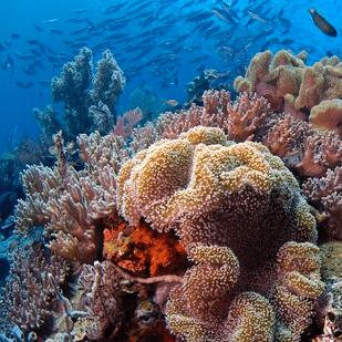 Indonesia 2018 - Hannah Baker