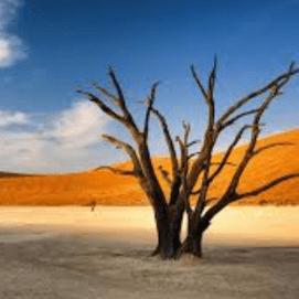 Namibia 2020 - Izzy Craft