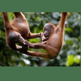 Borneo 2020 - Matthew Gray