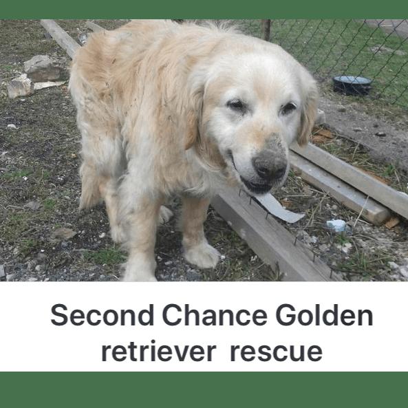 Second Chance Retriever Rescue - Balkans