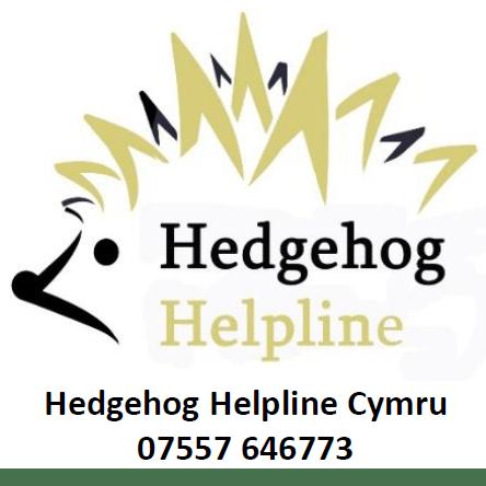 Hedgehog Helpline Cymru