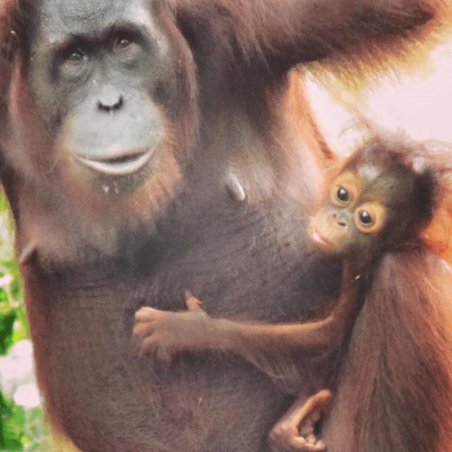 Borneo 2018 - Ben Law