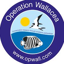 Operation Wallacea Honduras 2021 - Scott Hamstead