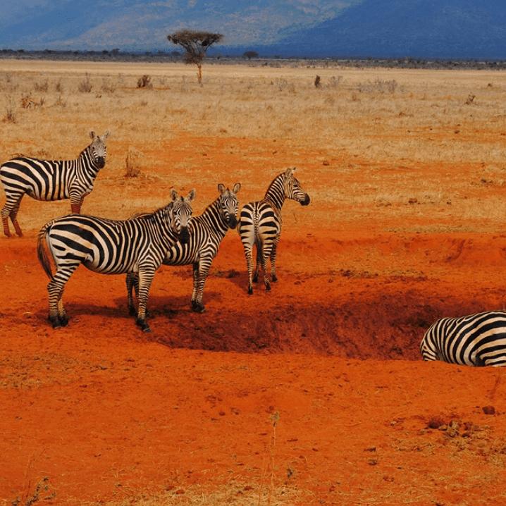 Camps International Kenya 2019 - Daisy King