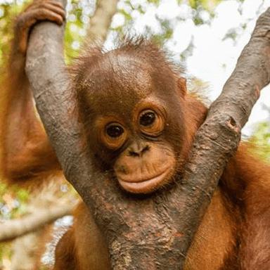 World Challenge Borneo 2019 - Fiona Sutherland