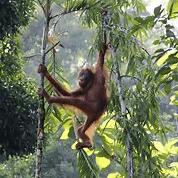Camps International Borneo - Samuel Corless