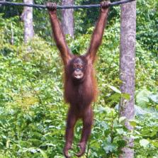 Camps International Borneo 2020 - Elizabeth Goddard