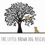 Little Brown Dog Rescue