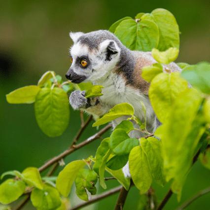 Madagascar 2018- Amy and Chenoa