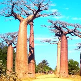 World Challenge Madagascar 2019 - Liam Evison