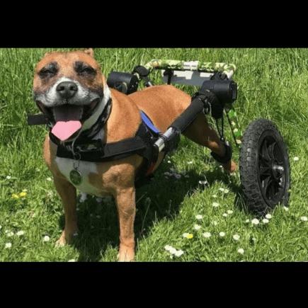 Winstons Wheels Fundraiser