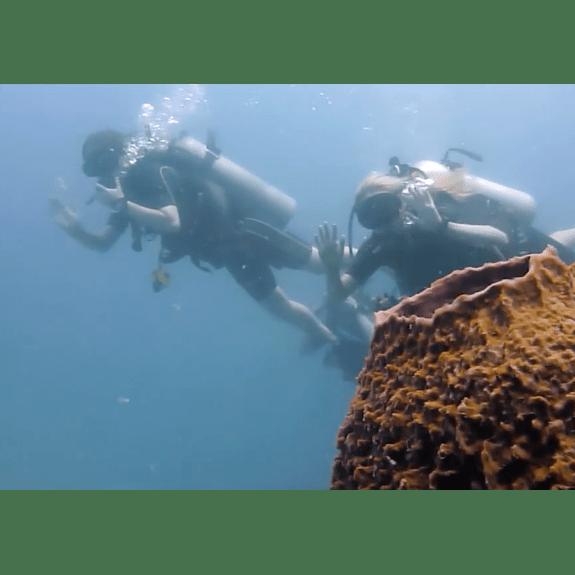 Operation Wallacea Indonesia 2018 - Olivia Byrne