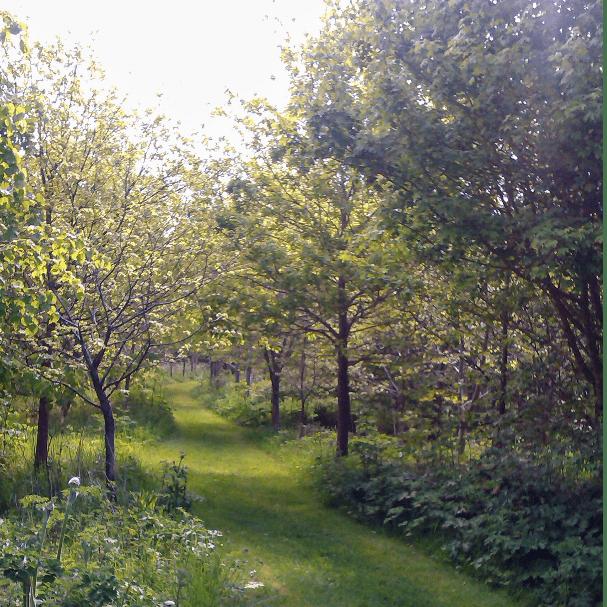 High Ham Millennium Wood