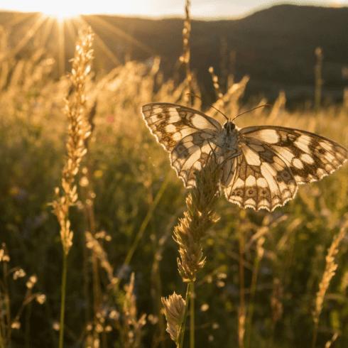 Transylvania 2019 - Katie Cordingley