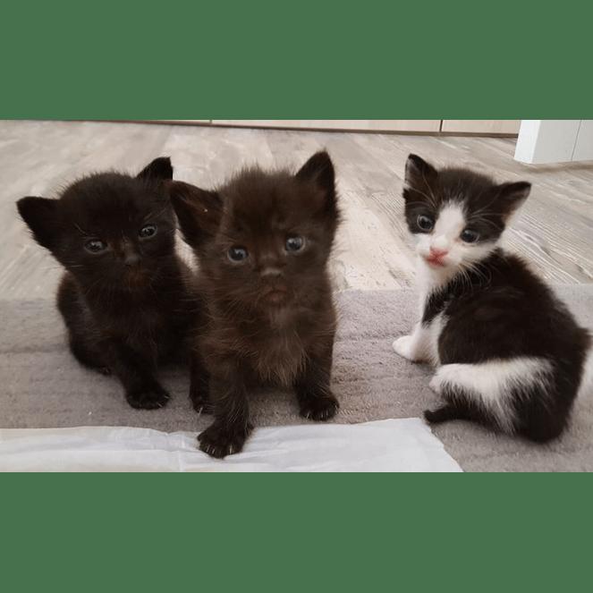 Kitties Orphanage