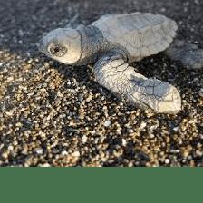 Global Action Costa Rica 2019 - Elmo Toosey